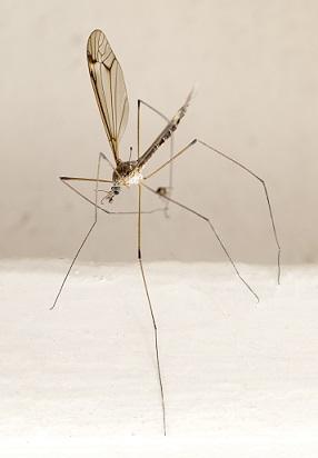 Přírodní repelenty - co platí na komáry?