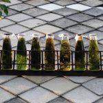 Bylinné tinktury a likéry pro vaše zdraví – jak je připravit?