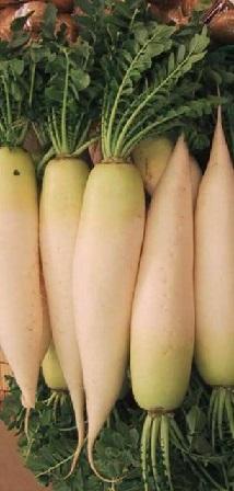 Bílá ředkev Daikon a zdraví - plná vitamínu C