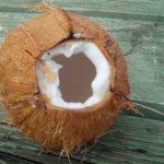 Kokos a jeho vliv na zdraví a krásu