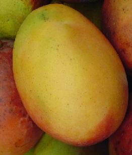 Mango a zdraví - je plné antioxidantů