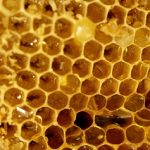 Med a zdraví – sladidlo i prostředek k léčbě