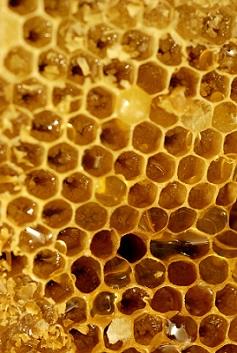 Med a zdraví