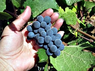 Víno má mnoho zdravotních benefitů...