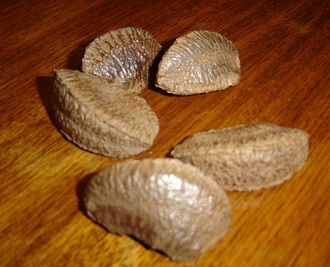Nevyloupané para ořechy...