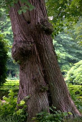 I stromy mohou léčit...