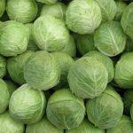 Kyselé zelí a zdraví – jaké má účinky?