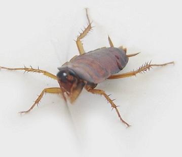Hmyz je velmi, velmi výživnou potravinou