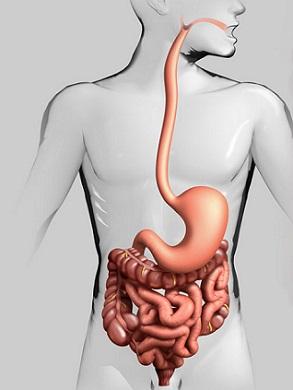 Rakovina tlustého střeva (Kolorektální karcinom) - vše, co o ní musíte vědět