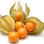 Mochyně peruánská a zdraví – nabízí nejen vysokou hladinu bioflavonoidů