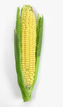 Kukuřice má nízký obsah kalorií a vysoký obsah vlákniny