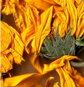 Zdravotní účinky voňavých květů bylin - jak mohou pomoci vašemu zdraví?
