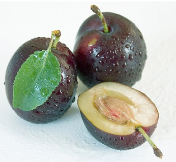 Jádra švestek obsahují kolem 20% oleje.