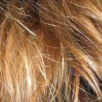 Jak na lámavé vlasy?