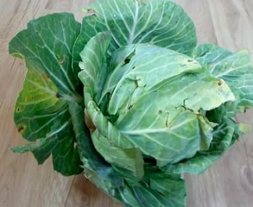 Listová zelenina a zdraví - proč bychom ji měli pravidelně jíst?