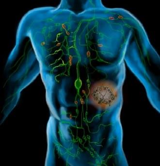 11 tipů jak vyčistit lymfu a lymfatický systém