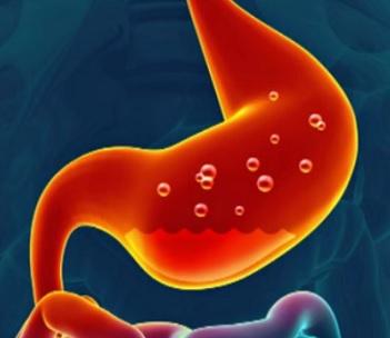 Hlavní funkcí žaludku je trávení. Protože obsahuje chlorovodík, chrání povrch žaludku alkalický hlen, takže tráví potravu, aniž tráví sám sebe. Objem žaludku u průměrného člověka je jeden až dva litry a dosahuje velikosti mezi 25 až 30 cm.