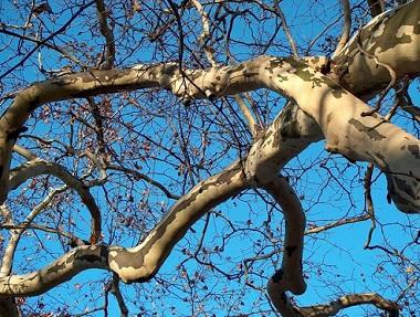 Kůra stromů může být léčivá...
