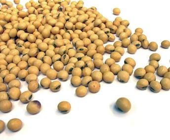 Soja patří mezi velký zdroj fytoestrogenů...