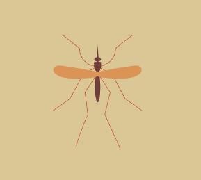 Malárie - příznaky, léčba, prevence