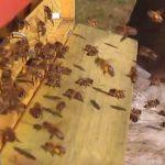 Léčivé vlastnosti včelího pylu – jaké má účinky?