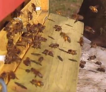 analýza pylu