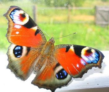 Kůže je křehká jako motýlí křídla, jakýkoliv tlak na ni je rizikový a rány stále bolí.
