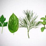 Léčivé látky v bylinkách a rostlinách – které nám pomáhají?