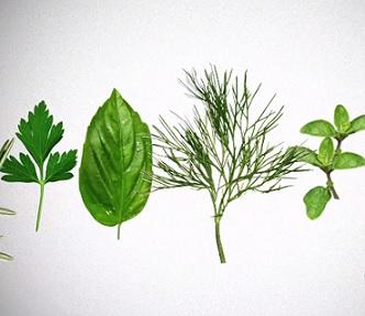 Jaké léčivé látky mají rostliny a bylinky?