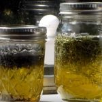 Majoránkový olej a jeho použití pro naše zdraví