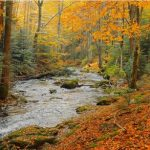 Podzimní detoxikace – jak na ni a proč přijde vhod?