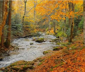 Podzim je vhodný pro detoxikační kůru.