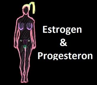 Jaká je funkce estrogenu a progesteronu v těle žen?