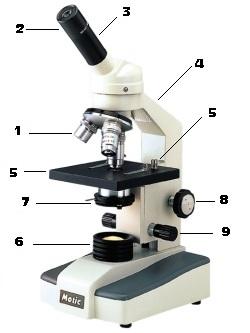 Mikroskopie a druhy mikroskopů - jaké má mikroskop části?