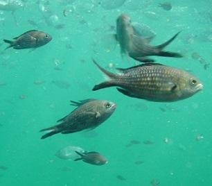 Mořské a sladkovodní ryby - vliv na zdraví - nejčastější dotazy