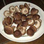 Zdravé houby a léčba nemocí – které houby na jakou nemoc?