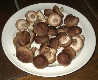 Které houby léčí nemoci?
