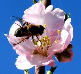Je tady jaro, je čas na detoxikaci.
