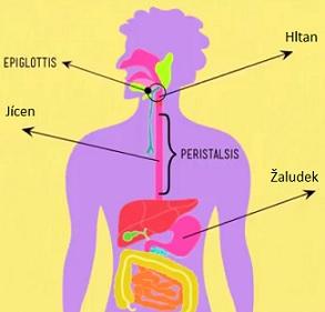 Jak zlepšit trávení?