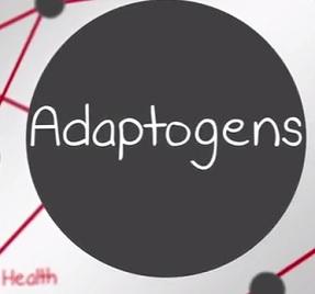 Proč jsou pro naše zdraví adaptogeny tak zajímavé?