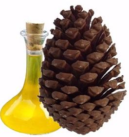 Jaké účinky na naše zdraví má borovicový olej? Přečtěte si náš článek.