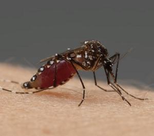 Domácí recepty, jak urychlit hojení po komářím štípnutí
