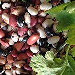 Saponiny a zdraví – jaké jsou jejich účinky?