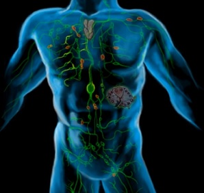 Lymfatické masáže (lymfomasáže) a zdraví - na detox i celulitidu