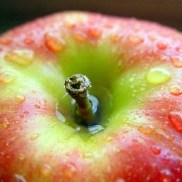 Dobrým zdrojem rutinu je třeba jablečná slupka.