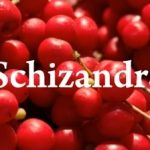 Schizandra čínská neboli Klanopraška čínská a její vliv na naše zdraví