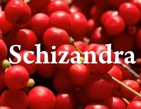 Schizandra čínská neboli Klanopraška a její vliv na naše zdraví