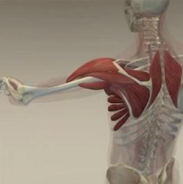 Co to vlastně je svalová dysbalance?
