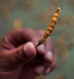 Cordyceps – čínská houba, která vám vrátí energii
