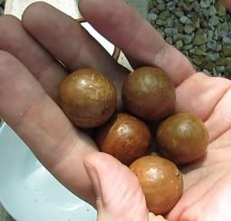 Makadamové ořechy jsou plné zdravých látek.